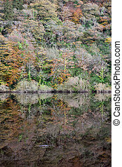 trees in a forest reflected on blackwater river - trees in a...