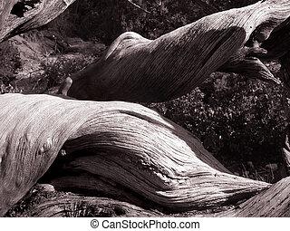 Deadwood - Utah deadwood