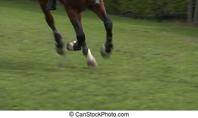horse race jump close up 03 - Close up of horse during a...