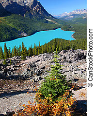 Peyto Lake of Banff National Park