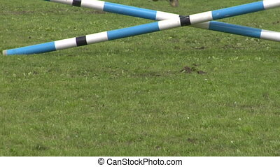 horse race jump close up 04 - Close up of horse during a...