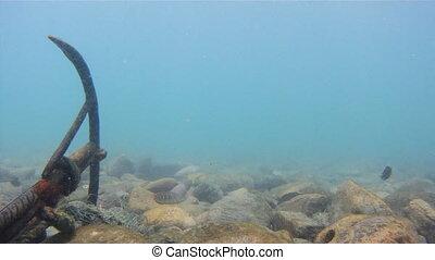 Underwater World of Bay of Bengal