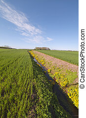 Ditch - Deep ditch in green field