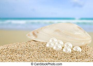mar, concha, grande, branca, pérola