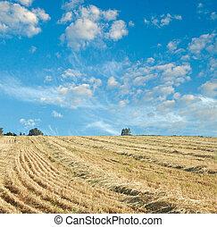 Reaped field