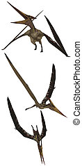 Pteranodon lived in North America - isolated on white
