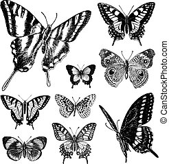 Vector Vintage Butterfly Set 1. All items are seperated.