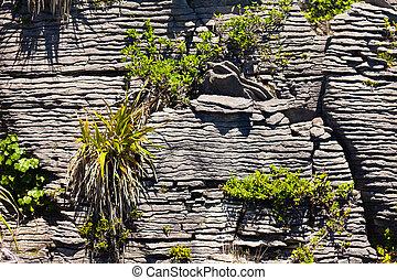 Pioneer plants in Pancake Rocks of Punakaiki, NZ