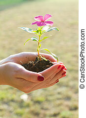 Growth and development - Female hands holding holding flower...