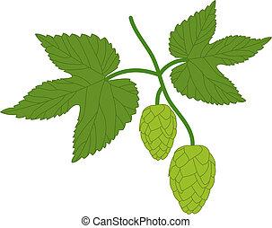 hop plant