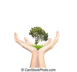 mãos, segurando, árvore