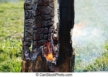 ardiendo fuego lento, árbol, tronco, quemado, afuera,...
