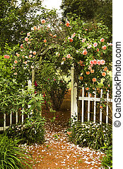 Rose Garden - Beautiful roses flowing over garden trellis