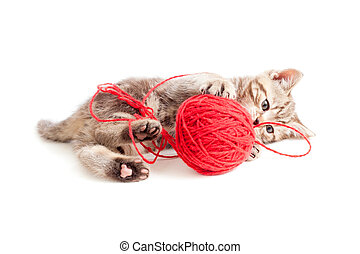 tabby kitten playing red clew or ball