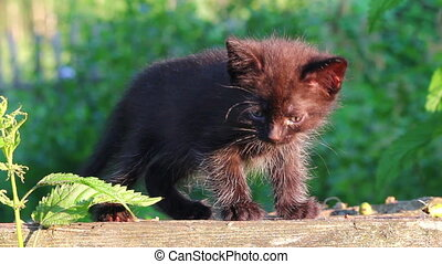 little black kitten plaintively mew outdoor