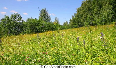 landscape with summer meadow and butterflies