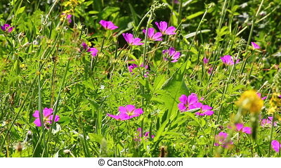 flowers on summer meadow