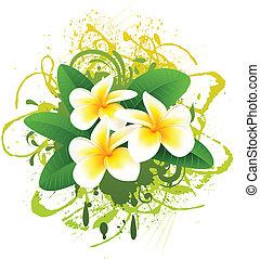 Banner with frangipani