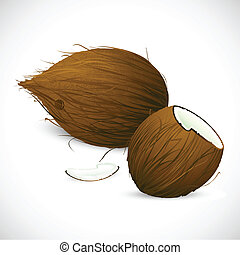 Coconut - illustration of dry coconut on white background