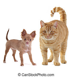 Small dog and big cat