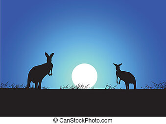 Kangaroo on the sunset background
