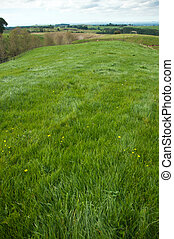 Pasture - Fresh green grass pasture in a paddock
