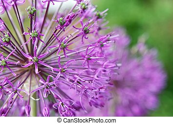 Inflorescence - Spring flower attracts the bright color and...