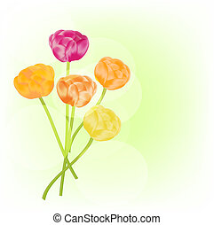 Flowers - Ranunculus vector background