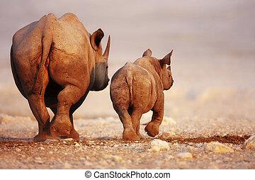 Black Rhinoceros baby and cow - Black Rhinoceros cow and...