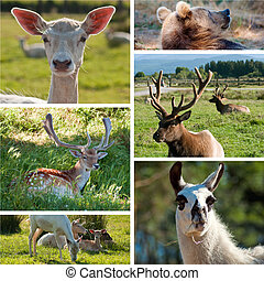 wild animals zoo collage with six photos of north america...