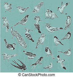 Hand drawn Birds - for design and scrapbook - in vector