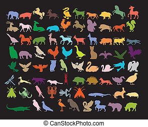 Big variety of animals. - Big variety of animals on black...