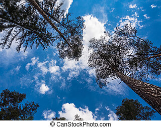 Trees with clouds in blue sky.