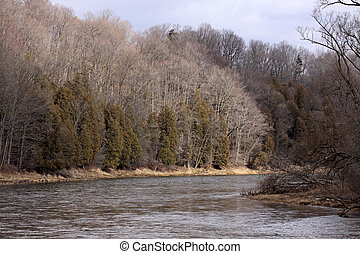 Grand River Treeline - The treeline along the Grand River in...