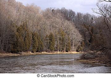 Grand River Treeline - The treeline along the Grand River in...