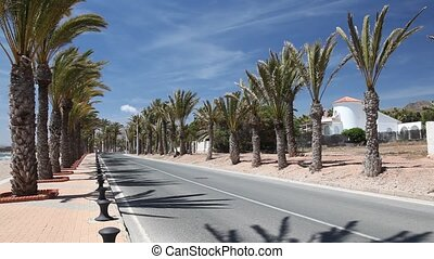 Palm trees alley in La Azohia, Spain