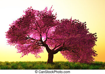Cherry Blossom Tree - Mysterious Cherry Blossoms Japanese...