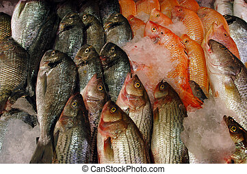Food and Cuisine - Fish