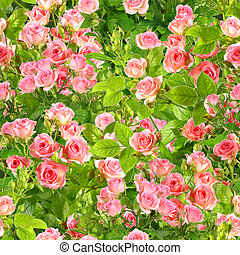 Background of branches with pink roses flowers - Abstract...