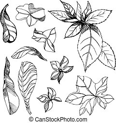 Floral design elements - Set of vector floral design...