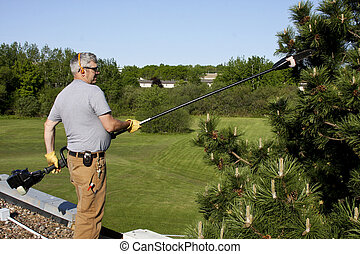 roof top tree trimming - caretaker cutting pine branches...