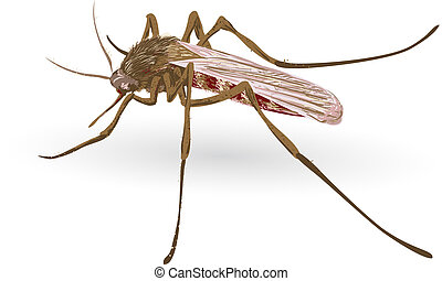 Mosquito. Vector illustration.