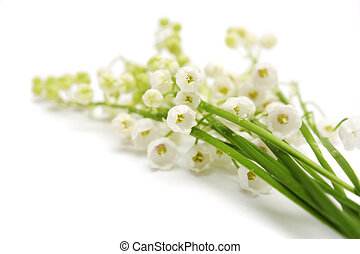 lily of the valley - Lily of the valley on a white...