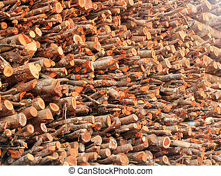 Deforestation- logs of chopped wood piled for sale - Logs of...