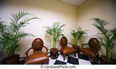modern interior with leather armchairs, palm trees on floor...