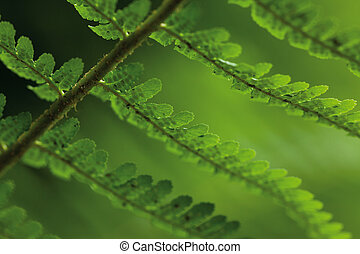 leaves of fern on green blur background