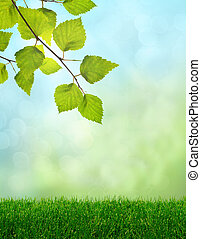 Green grass spring fantasy - Green grass and birch leaves...