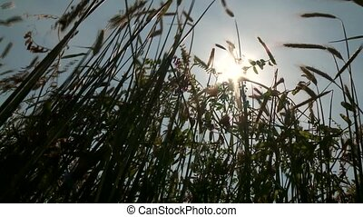 Grainfield With Sun