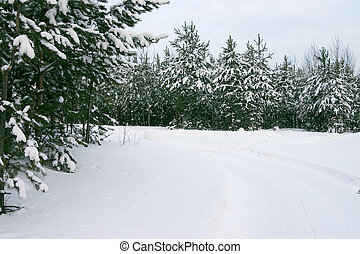 Wood from evergreen trees covered by a snow on a background of the cloudy sky