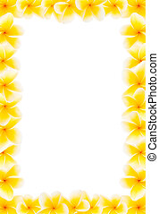 Yellow frangipani full border - Full border made from yellow...